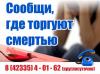 С 20.10.2020г. по 30.10.2020г. на территории Приморского края проходит второй этап Всероссийской антинаркотической акции «Сообщи, где торгуют смертью».